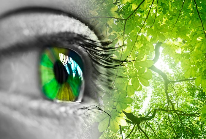 Psychology Of The Colour Green