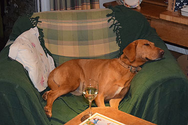 Dog With Wine Glass