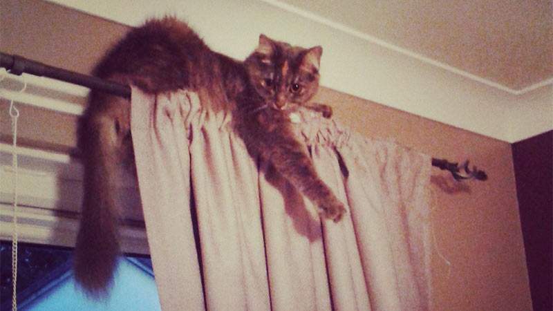 Cat On Curtain Rail